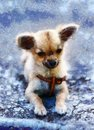 Little charming adorable chihuahua puppy. and computer painting effect.