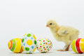 Little Chicks And Easter Eggs