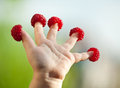 Little child's hand with raspberries Royalty Free Stock Photo