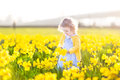Little curly toddler girl field of yellow daffodil flowers beautiful in a blue dress playing in a on a sunny summer evening Royalty Free Stock Images