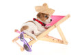 Little cute beach puppy resting chair Royalty Free Stock Images