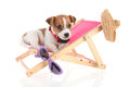 Little cute beach puppy resting chair Royalty Free Stock Photography