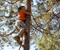 Little cute boy climbing on tree hight summer adventure Royalty Free Stock Photo