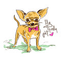 Little cute chihuahua dog hand drawn illustration with isolated Stock Photos