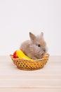Little Cute Decorative Rabbits