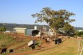 A little dairy farm in Australia Stock Photo