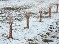 Little decorative trees Royalty Free Stock Photo