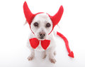 Little devil dog with horns and tail Royalty Free Stock Photography