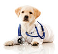 Little dog as a vet Royalty Free Stock Photo