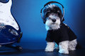 Little dog with headphones and guitar