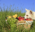 Little dog on a meadow Stock Photos