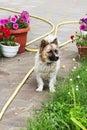 Little dog in summertime