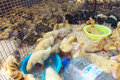 Little ducklings crowd gathered in the cage. Young ducks on a po