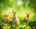 Little easter bunnies rabbits art design of cute in the meadow Royalty Free Stock Images