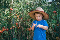 Little farmer cute standing boy in organic garden Stock Image