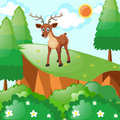 Little fawn standing on cliff