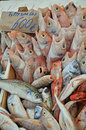 Little fishes for sale in a sicilian fish market Stock Photography