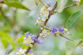 Little flower in the garden or nature park thailand Stock Photos