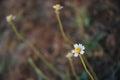 Little flower in the morning