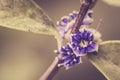 Little flower vintage in the garden or nature park thailand Stock Photos
