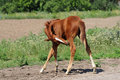 Little foal itches Royalty Free Stock Photo