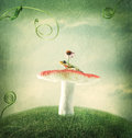 Little frog on the magical mushroom Royalty Free Stock Photo
