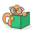 Little funny cartoon cat with big glasses reads the book on a white background Royalty Free Stock Images