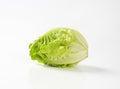 Little gem lettuce Royalty Free Stock Photo