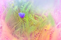Little gentle flower in meadow beautiful purple Royalty Free Stock Photos