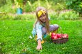 Little girl with basket of apples in sunny autumn beautiful a Stock Photo