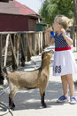 Little girl and billy goat eating ice cream being followed by Stock Photography