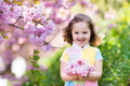 Little girl with cherry blossom Royalty Free Stock Photo