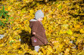 Little girl child baby in a coat and hat game makes its first steps in autumn park among fallen yellow maple leaves Royalty Free Stock Photo