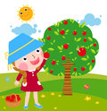 A little girl collects apples in sunny day Royalty Free Stock Photography