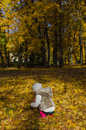 Little girl collects leaves fallen autumn from the back Royalty Free Stock Photos