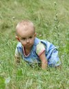 Little girl crawls in the grass Royalty Free Stock Image