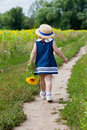 Little girl in a dark blue dress goes on a footpath near a field of blossoming sunflowers Stock Images