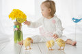 Little girl with down syndrome playing with yellow chickens a Royalty Free Stock Photo
