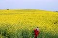 Little girl enjoy in music on yellow field summer season Royalty Free Stock Photo