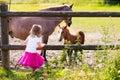 Little girl feeding baby horse on ranch Royalty Free Stock Photo