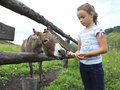 Little girl feeding donkey carrot Royalty Free Stock Photo
