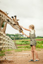 Little girl feeding a giraffe at the zoo Royalty Free Stock Photo