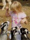 Poco ragazza capre