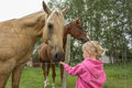 Little girl feeding a horse Royalty Free Stock Photo