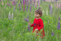 Little girl in a field of wild flowers lupin Royalty Free Stock Image