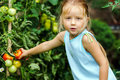 Little girl helping her mother with tomato in the garden Royalty Free Stock Photo