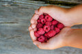 Little girl is holding handful of fresh ripe raspberries on the background old wood planks Royalty Free Stock Photo