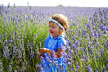 Little girl in a lavender field lovely Royalty Free Stock Images