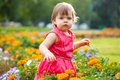 Little girl in orange flowers Royalty Free Stock Image