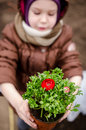 Little girl with persian buttercup holding red Stock Photos